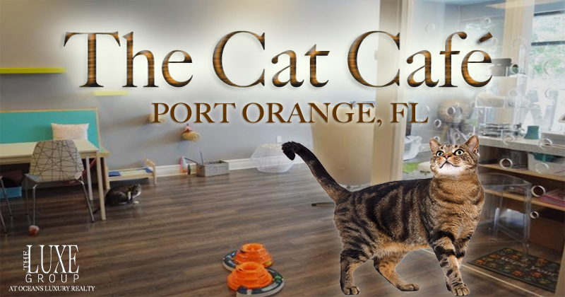 The Cat Cafe in Port Orange, Florida - The LUXE Group 386.299.4043
